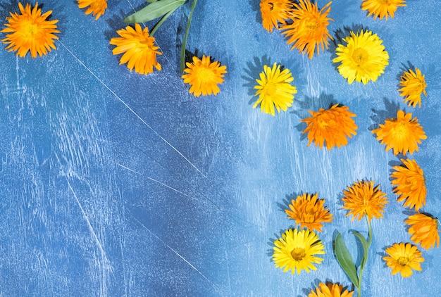 Motif Floral De Fleurs De Calendula Sur Bleu Photo Premium