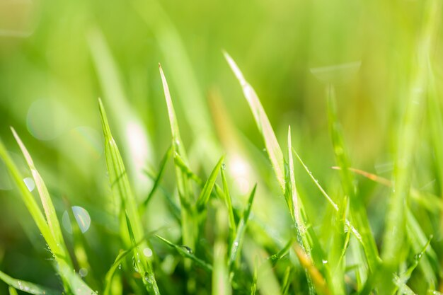 Motif d'herbe, flou et bokeh Photo Premium
