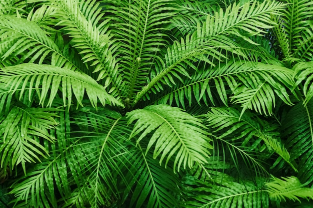 Motif texturé de fougère naturelle. belle fougère verte laisse fond. Photo Premium