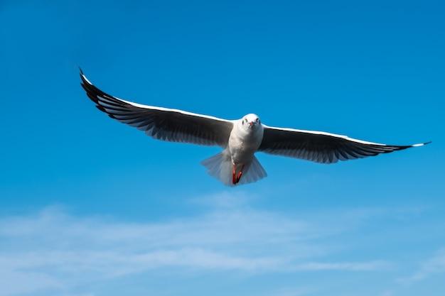Mouette dans le ciel Photo Premium