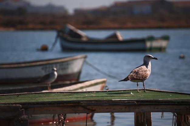 Mouette entre bateaux sur l'eau Photo Premium