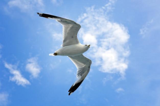 Mouette unique volant sur ciel bleu et nuages blancs. Photo Premium