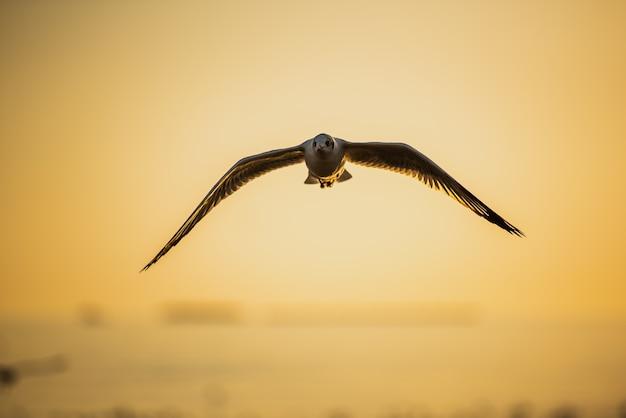 Mouette volant dans un ciel bleu au-dessus de la mer au coucher du soleil. Photo Premium