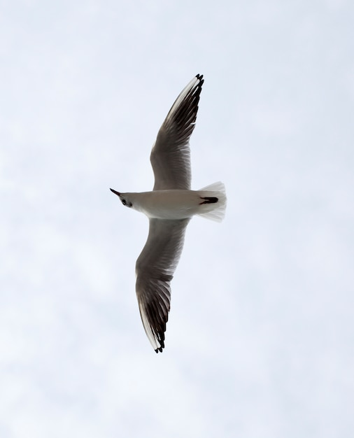 Mouette Photo Premium