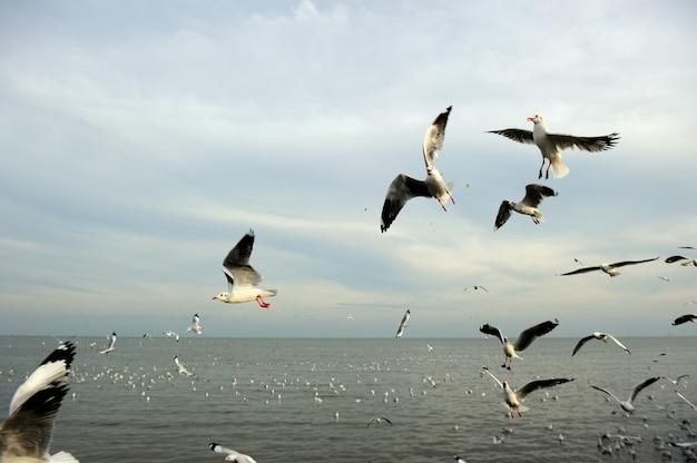 Mouettes dans l'eau et voler dans le ciel avant le coucher du soleil, mise au point sélectionnée Photo Premium