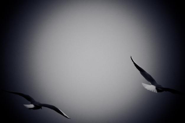 Les mouettes qui volent sur la mer. photo en noir et blanc avec effet grain de film Photo gratuit
