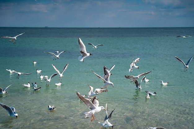 Les Mouettes Survolent La Surface De La Mer Photo gratuit