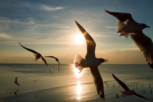 Mouettes volant dans la mer au coucher du soleil Photo Premium