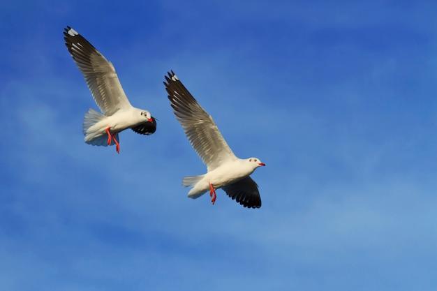 Mouettes volant sur fond de ciel bleu Photo Premium