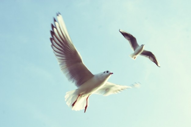 Mouettes volant Photo gratuit