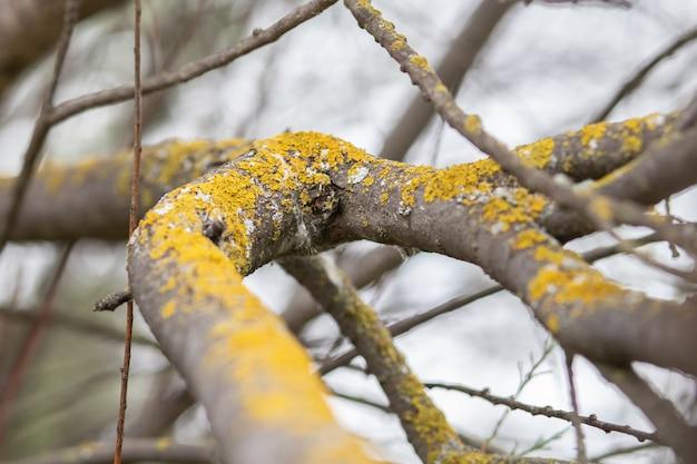 Mousse sur l'écorce des arbres à cause de l'humidité de l'environnement Photo Premium