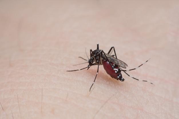 Moustique sucer le sang de la peau humaine se bouchent Photo Premium