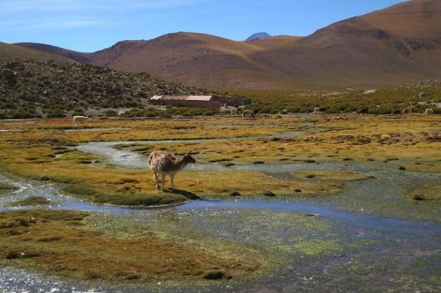 Moutons explorer Photo gratuit