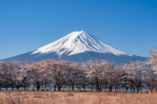 Mt. fuji au printemps avec des fleurs de cerisier à kawaguchiko fujiyoshida, japon. Photo Premium