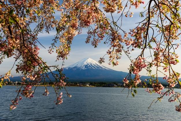 Mt. fuji et fleur de cerisier rose Photo Premium