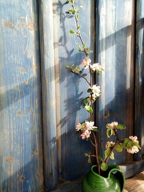 Mur bleu branche de fleur de pommier Photo Premium