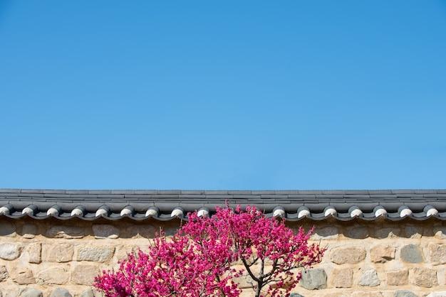 Un mur de ciel bleu et de fleur de prunier rouge Photo Premium