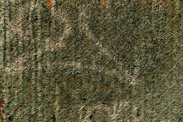Mur décoré de feuilles de pin Photo gratuit