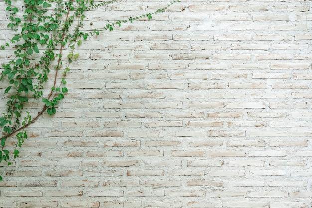 Le mur est en brique puis peint en blanc. Photo Premium