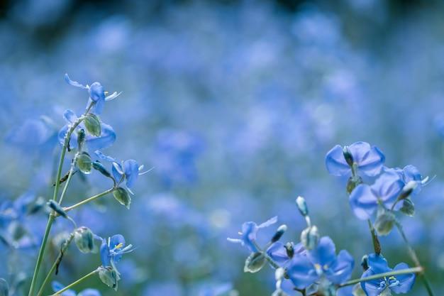 Murdannia Giganteum Fleur Sur Fond Flou. Photo Premium