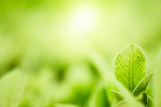 Nature green leaves sur fond d'arbre de verdure floue avec la lumière du soleil Photo Premium