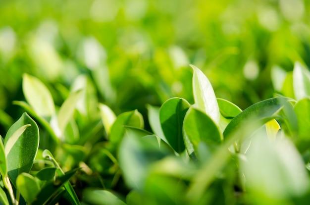 Nature laisse fond vert Photo Premium