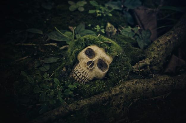 Nature morte avec un crâne humain aux racines Photo Premium