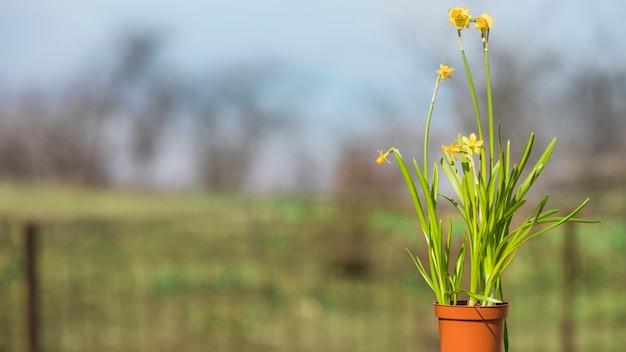 Nature morte de plantes et de jardins Photo gratuit