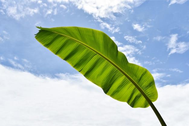 Nature de la plante tropicale verte avec des feuilles de bananier fraîches Photo Premium