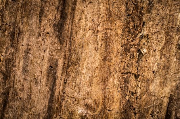 Naturel Beau Vieux Bois Texture, Gros Plan Photo gratuit