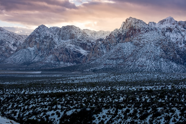 Neige sur le parc national de red rock canyon Photo Premium