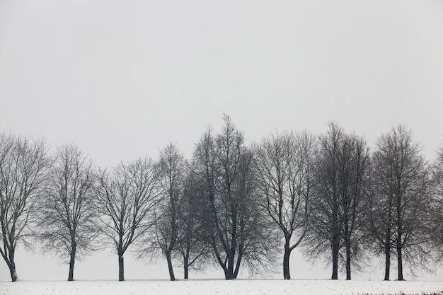Neige Photographiée En Hiver, Apparue Après Une Chute De Neige. Fermer, Photo Premium