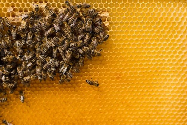 Nid d'abeille avec abeilles Photo gratuit