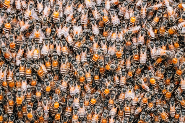 Nid d'abeille avec abeilles Photo Premium