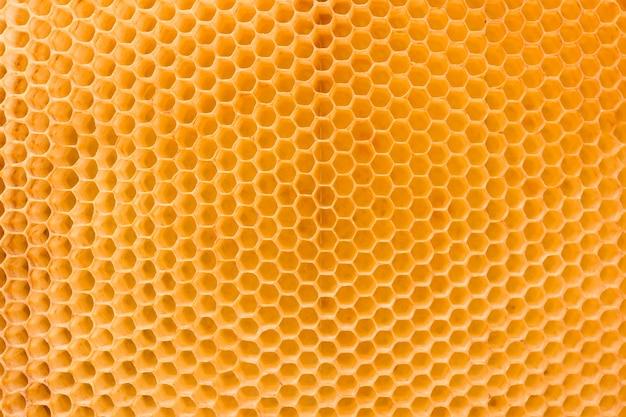 Nid d'abeille Photo gratuit