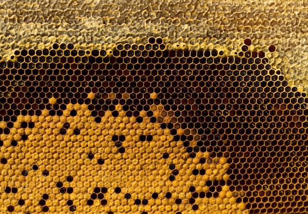 Nid d'abeilles au miel Photo Premium