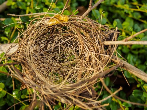Nid d'oiseau sur une branche Photo Premium
