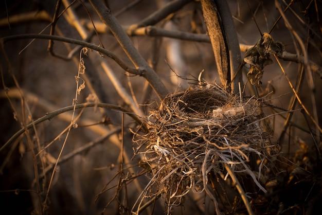Un nid d'oiseau vide sur les branches d'un gros plan d'arbre. Photo Premium