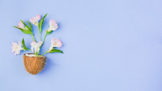 Noix de coco avec des fleurs tropicales Photo gratuit