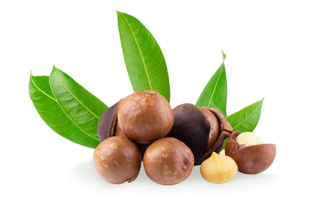Noix de macadamia isolé sur fond blanc Photo Premium