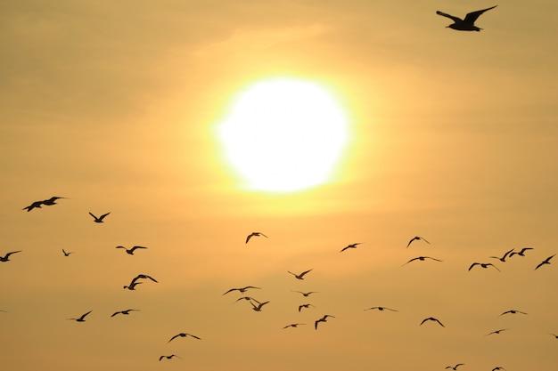 De nombreuses mouettes volant contre le soleil levant brillant, fond de nature Photo Premium