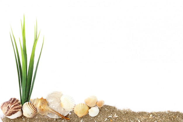 De nombreux coquillages blancs, bruns et oranges avec des algues vertes s'entassent sur du sable isolé sur fond blanc Photo Premium