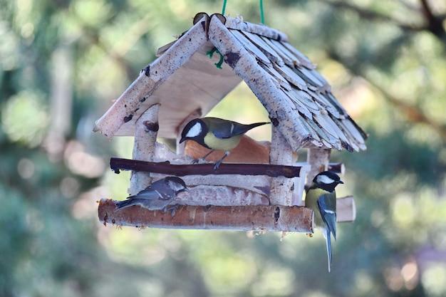 Nourrir Les Oiseaux à L'air Frais. Mésange Mangeant Du Pain Blanc. Photo Premium