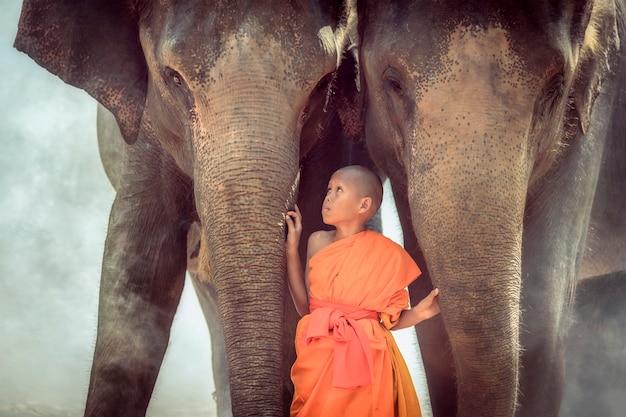 Les Novices Jouent Avec Deux éléphants. Photo Premium