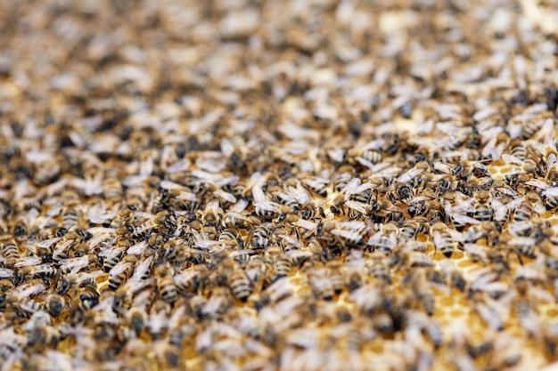 Nuée D'abeilles Dans Le Rucher Photo Premium