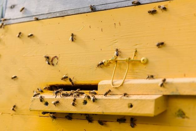 Nuée D'abeilles à L'entrée De La Ruche Jaune Photo Premium