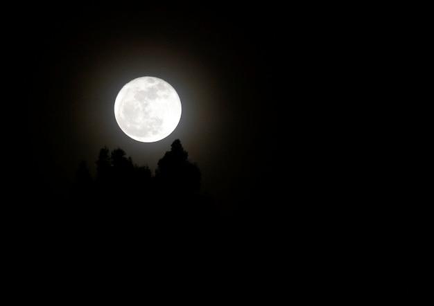 Nuit beau loup lune Photo gratuit