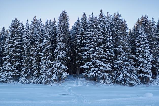 Nuit dans la forêt sombre promenade dans le bois avant noël Photo Premium