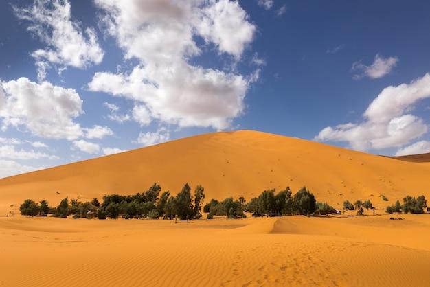 Oasis dans le désert du sahara Photo Premium