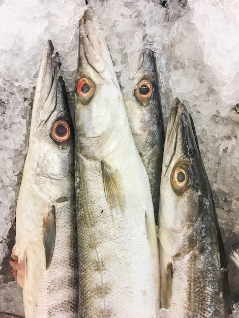 Obtus barracuda fish Photo gratuit